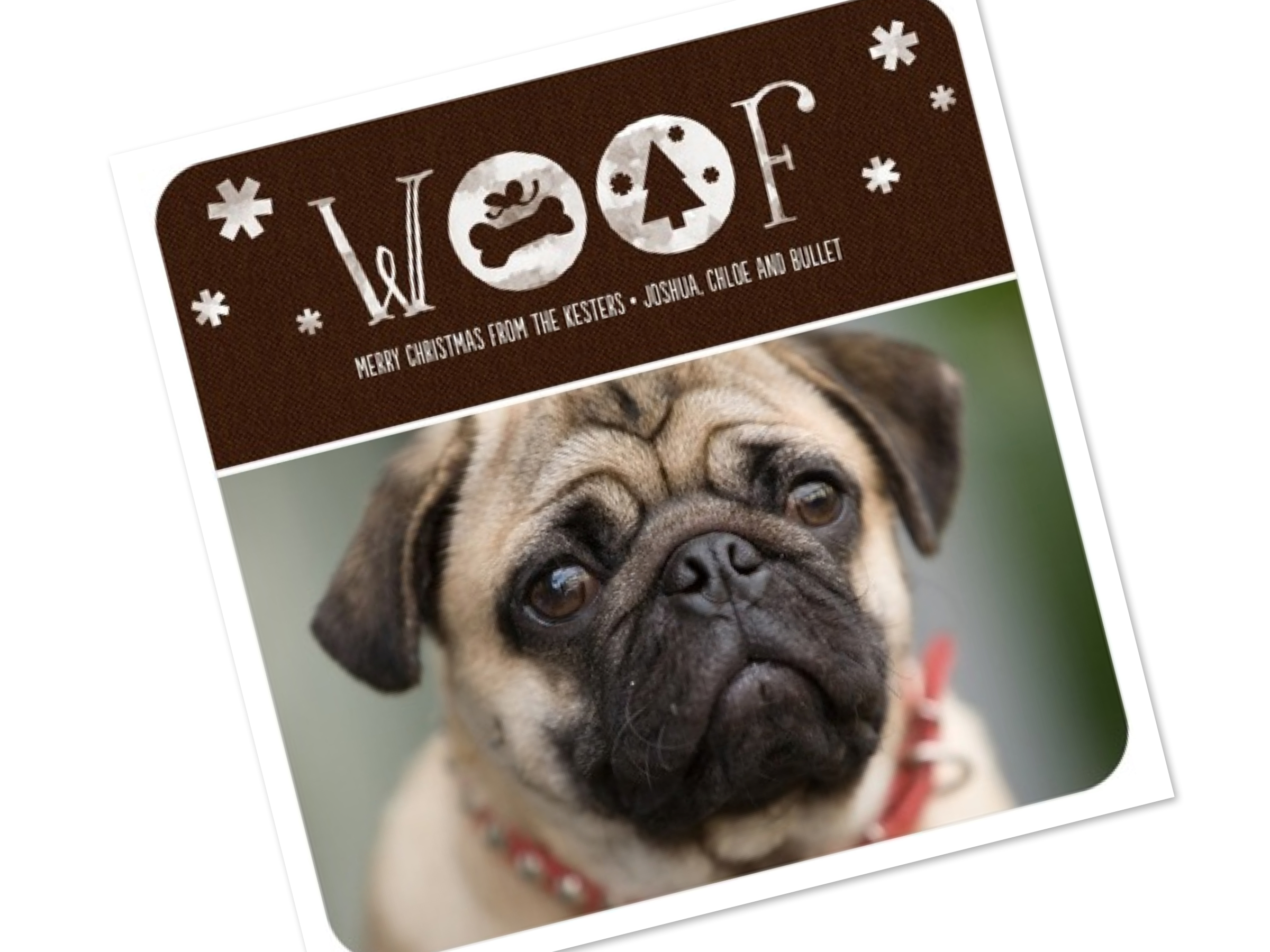 Best Pet Holiday Cards
