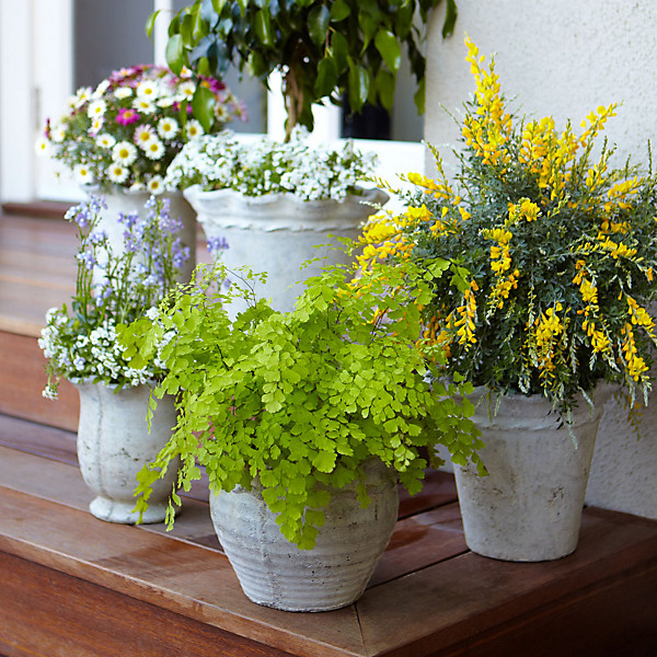 Mosquito Repelling Plants | Outdoor Entertaining